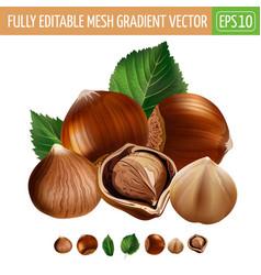 Hazelnuts on white background vector