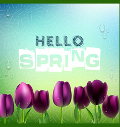 Spring background with purple tulips flowers vector