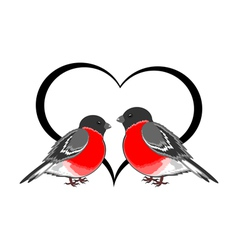 A couple of cute bullfinches pyrrhula with a heart vector