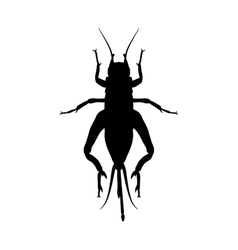 Cricket grig gryllus campestris sketch of vector