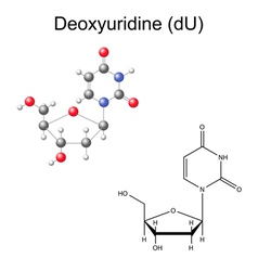Chemical formula and model of deoxyuridine vector image vector image