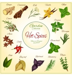 Herbs and hot spices poster vector image