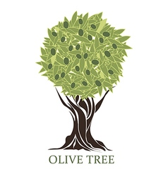 logo olive tree with olives vector image