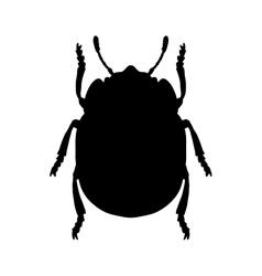 Colorado potato beetle leptinotarsa decemlineata vector
