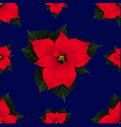 red poinsettia on navy blue background vector image