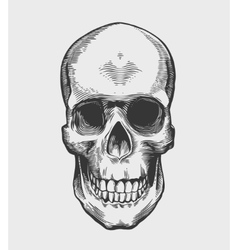 Skull in vintage engraving style vector