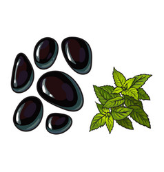 Black basalt massage stones and mint leaves spa vector