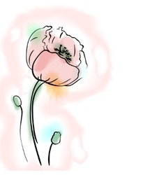Digital watercolor flower poppy vector