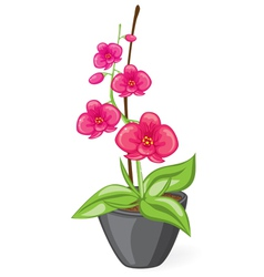 Pink orchid in the pot vector