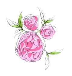 Bright pink peonies vector