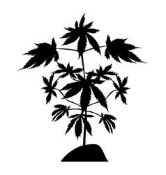 marijuana plant silhouette vector image