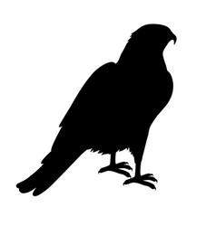 hawk flat design vector image