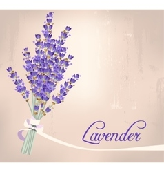 Lavender bouquet vector