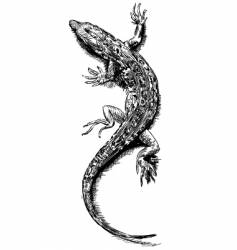 Lizard sketch vector