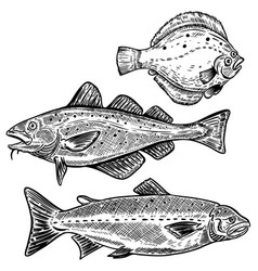 Cod salmon flounder fish isolated vector
