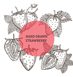 hand drawn strawberry fruits vector image vector image