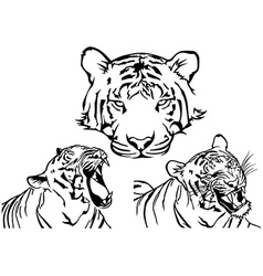 Tiger tattoo drawings vector