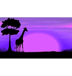 Silhouette of giraffe in safari vector image
