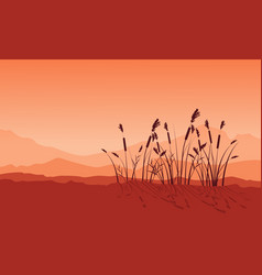beauty landscape of coarse grass silhouettes vector image