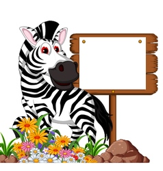 funny zebra cartoon posing with blank board vector image
