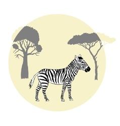 Zebra between savanna trees vector image vector image