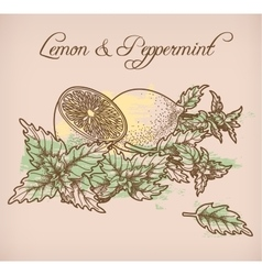 Lemon and peppermint vector