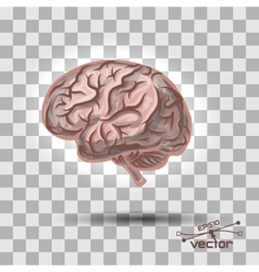 Brain of the person vector