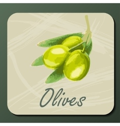 Green olive on a branch vector