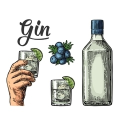 Glass and bottle of gin and branch of Juniper with vector image vector image