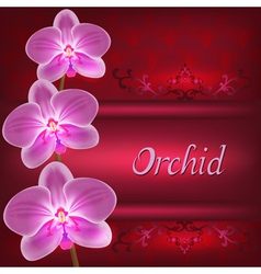 Greeting or invitation card with orchid flower vector