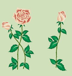 Tea rose with buds in cartoon style vector