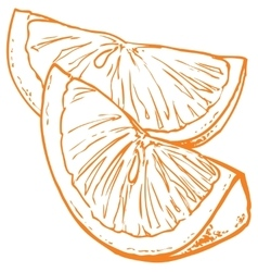 Monochrome orange slices vector