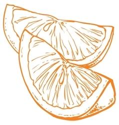 monochrome orange slices vector image