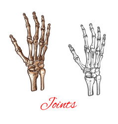 Sketch icon of human hand bones or joints vector