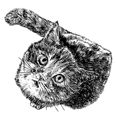 Cat 02 vector image