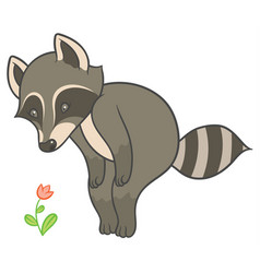 Cartoon raccoon looks at flower vector