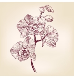 Floral orchid hand drawn llustration vector