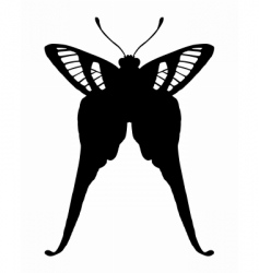 Tropical butterfly vector
