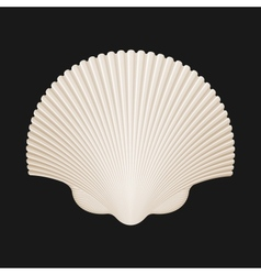 Brown scallop shell isolated on black vector