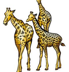 Family giraffes vector