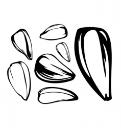 set of sunflower seed vector image