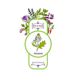 Vintage herbs and spices label collection mustard vector