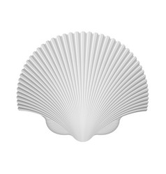 Scallop shell isolated on white vector