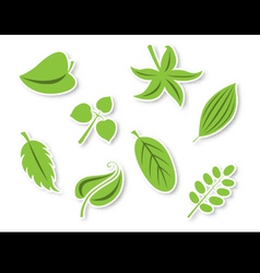 Decorative leaves set vector