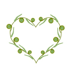 Fresh Green Fiddleheads in A Beautiful Heart vector image vector image