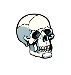 human skull isolated on white background vector image vector image