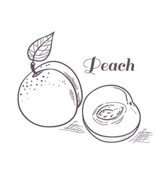 Hand drawn peach with slice vector image