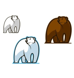 Polar and brown bear vector