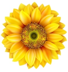 Sunflower realistic  eps 10 vector