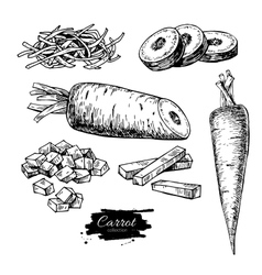 Carrot hand drawn set vector